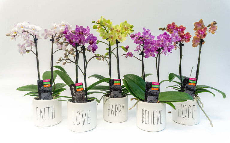 Orchids in Inspirational Pots