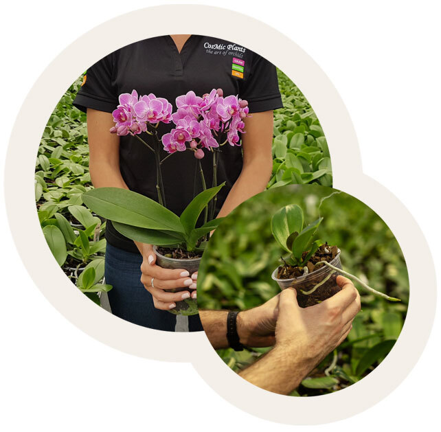 Our Orchids Our Difference